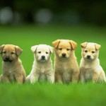 30 Most Cutest puppy Dog Pictures