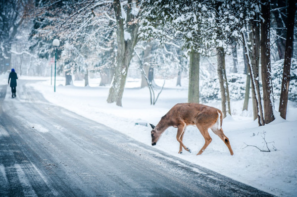 Deer Snow Road Stock Wallpaper Impfashion All News About