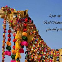 Eid ul Adha Pictures Free Download