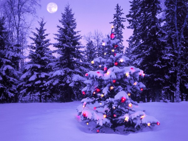 Christmas Wallpaper Tree Lights Snow