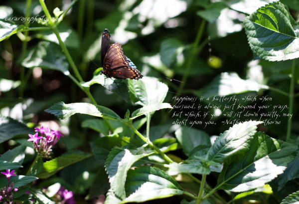 Butterfly Happiness Quotes