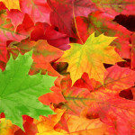 free fall leaves shutterstock